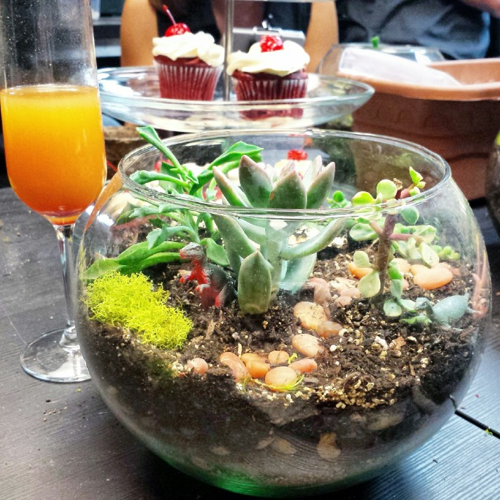 Tanayas Table DIY Terrarium Makerskit Mimosas Cupcakes